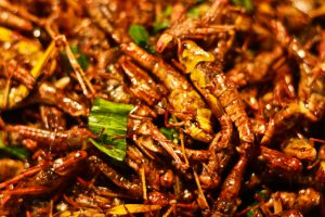 Close up of fried grasshoppers Fried insects mealworms for snack